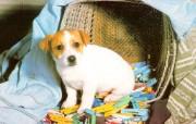 宠物宝贝二狗狗壁纸 动物壁纸