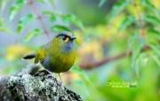 春天里可爱的小鸟壁纸 春天里可爱的小鸟壁纸 动物壁纸