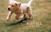 导盲犬小Q 动物壁纸