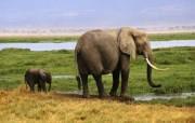大象 陆地上的老大! 动物壁纸
