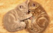 动物壁纸 动物壁纸