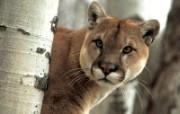 动物大本营高清壁纸 动物壁纸