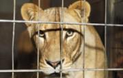 动物合集4 动物壁纸