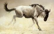 动物绘画风格壁纸 动物壁纸