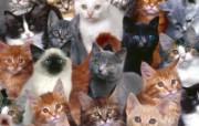 动物写真 动物壁纸