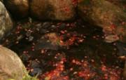 枫叶满地 1600x1200 动物壁纸