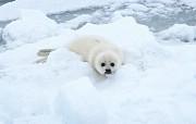 海狮海豹 动物壁纸