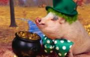 可爱猪 动物壁纸