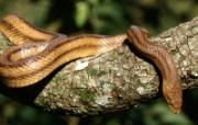 蛇类写真 动物壁纸