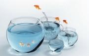 跳跃金鱼 动物壁纸