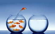 跳跃金鱼 1 6 跳跃金鱼 动物壁纸