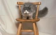 富贵猫2壁纸 动物壁纸