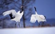 感受大自然:快活的鸟 动物壁纸