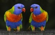 高清动物壁纸下载 高清动物壁纸下载 动物壁纸
