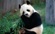 高清动物桌面壁纸下载 高清动物桌面壁纸下载 动物壁纸