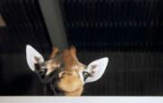 高清精美动物生物壁纸 一 1600x1200 壁纸7 高清精美动物生物壁纸 动物壁纸