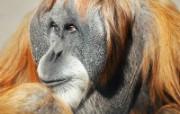 高清精美动物生物壁纸 一 1600x1200 壁纸17 高清精美动物生物壁纸 动物壁纸