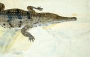 高清精美动物生物壁纸 一 1600x1200 壁纸20 高清精美动物生物壁纸 动物壁纸