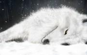 高清精美近距摄影动物生物宽屏壁纸 壁纸5 高清精美近距摄影动物 动物壁纸