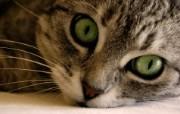 高清精美近距摄影动物生物宽屏壁纸 壁纸13 高清精美近距摄影动物 动物壁纸