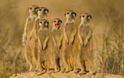 高清精美近距摄影动物生物宽屏壁纸 壁纸19 高清精美近距摄影动物 动物壁纸