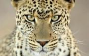 高清精美近距摄影动物生物宽屏壁纸 壁纸22 高清精美近距摄影动物 动物壁纸