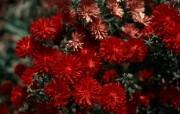 高清宽屏单反摄影花卉花朵壁纸 2010 01 16 壁纸23 高清宽屏单反摄影花卉 动物壁纸