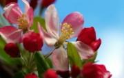 高清宽屏单反摄影花卉花朵壁纸 2010 01 16 壁纸29 高清宽屏单反摄影花卉 动物壁纸