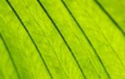 高清绿叶壁纸 160 动物壁纸