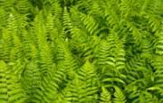高清绿叶壁纸 1600x1200 壁纸9 高清绿叶壁纸 160 动物壁纸