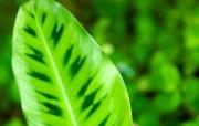 高清绿叶壁纸 1600x1200 壁纸12 高清绿叶壁纸 160 动物壁纸
