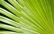 高清绿叶壁纸 1600x1200 壁纸18 高清绿叶壁纸 160 动物壁纸