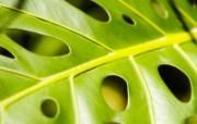 高清绿叶壁纸 1600x1200 壁纸19 高清绿叶壁纸 160 动物壁纸