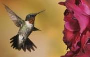 高清鸟类摄影壁纸 动物壁纸