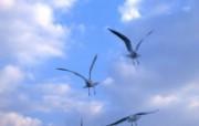 高清摄影鸟类壁纸(二 动物壁纸