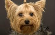 高清晰Webshots 动物壁纸上 动物壁纸
