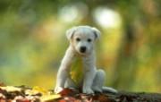 狗壁纸 动物壁纸