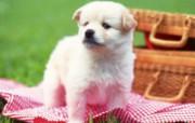 狗狗宽屏桌面壁纸 动物壁纸