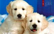 狗年奉献可爱小狗月历壁纸 动物壁纸