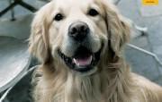 狗年看狗第一辑 动物壁纸