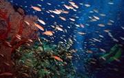 海底世界鱼群上集 动物壁纸