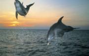 海豚 动物壁纸