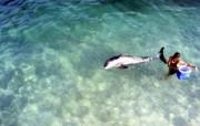 海豚壁纸 动物壁纸