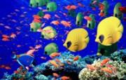 海洋生物壁纸精选下篇 动物壁纸