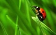 韩国专题摄影壁纸之昆虫记 动物壁纸