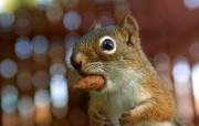 后院里的花栗鼠 超搞笑 贪吃杏仁的花栗鼠图片 后院里的花栗鼠 35张 动物壁纸