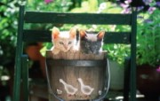两只小猫咪 木桶里的小猫咪图片壁纸 后院里的小猫咪 动物壁纸
