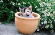 花盆里的小花猫图片壁纸 后院里的小猫咪 动物壁纸