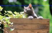 小黄猫 花盆里的小猫咪图片壁纸 后院里的小猫咪 动物壁纸
