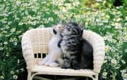 猫咪好朋友 椅子上的小猫咪图片壁纸 后院里的小猫咪 动物壁纸